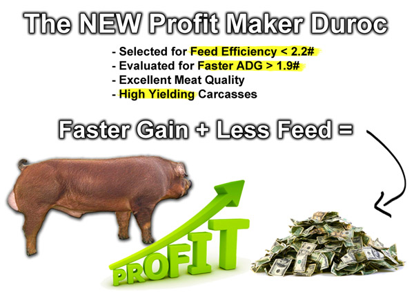 Feed efficient duroc semen